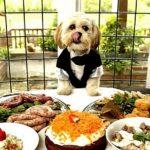 Pet Food: Crescimento e Tendências de investimento