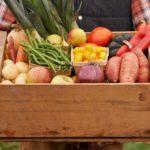 Alimentos Orgânicos: da segurança alimentar a sustentabilidade